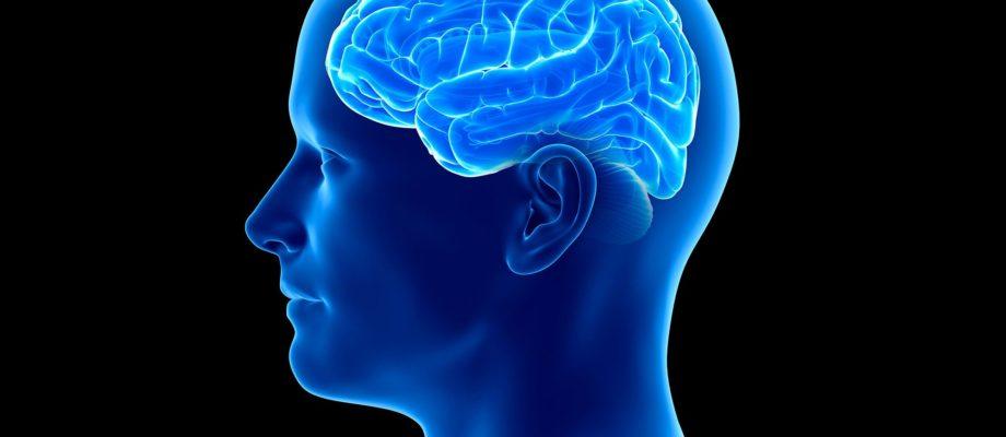 What does each brain lobe control