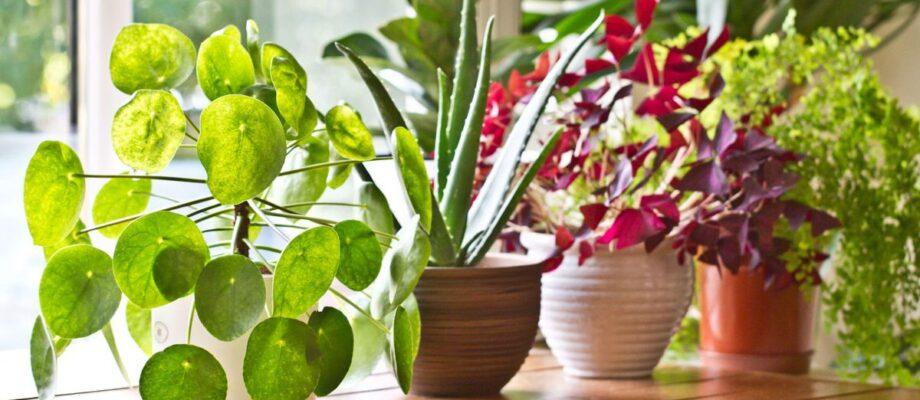 Amazing Health Benefits of Indoor Plants
