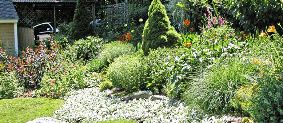 10 Tips For Recovering An Overgrown Garden